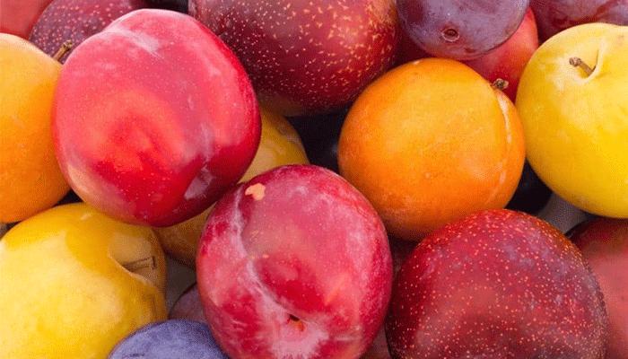 Сливы на зиму без сахара: простые рецепты заготовок